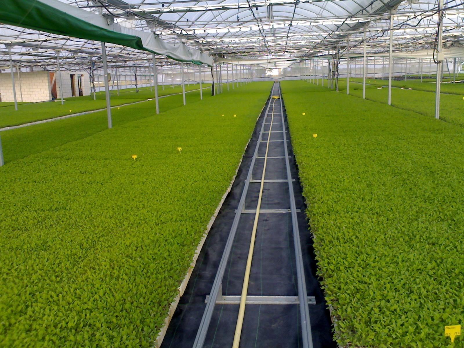 Jardineria en extremadura productos exagal for Articulos para jardineria